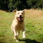 Welwyn Walks Doggy Day Care