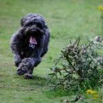 Welwyn Walks Home Visits